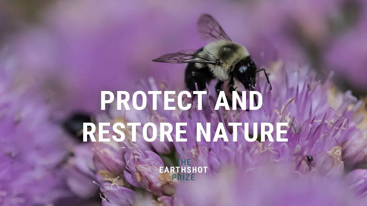 PROTECT AND RESTORE NATURE