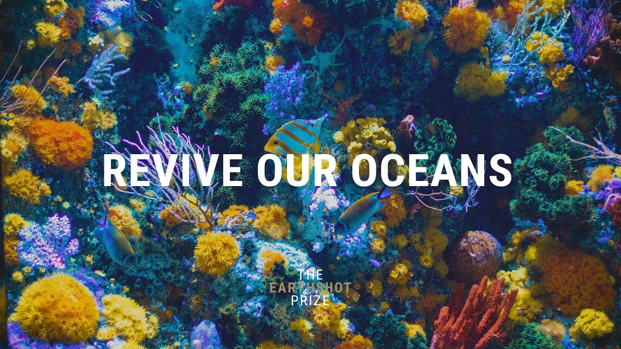 REVIVE OUR OCEANS
